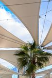 Green palm tree under white awning with blue cloudy sky. Green palm tree under the white awning with blue cloudy sky Royalty Free Stock Image
