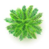 Green palm tree, vector 3D illustration isolated on white background. Top view on branches of coconut tree. Green palm tree, vector 3D illustration isolated on Royalty Free Stock Images