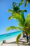 Tropical beach with palm. Green palm tree on a white sand beach Royalty Free Stock Photo