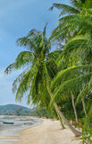 Green palm trees in the beach Stock Images