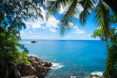Green Palm Trees on Beach Shore Under Blue and White Sunny Cloudy Sky Royalty Free Stock Images