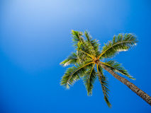 Green palm trees Stock Images