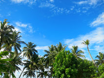 Green palm trees on blue sky background Stock Images