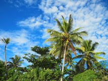 Green palm trees on blue sky background Stock Photo