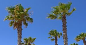 Green Palm Trees On Blue Sky. Green Palm Trees On Clear Blue Sky stock video