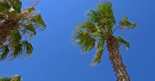 Green Palm Trees On Blue Sky. Green Palm Trees On Clear Blue Sky stock video footage
