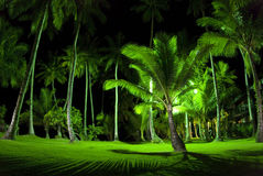 Green Palm Trees at Night royalty free stock photos