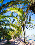 Green palm trees over blue sky Royalty Free Stock Image