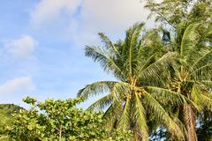 Green palm trees on shore. Blue sky Stock Photography