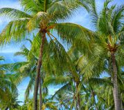 Green Palm Trees Under Blue Sky Stock Image