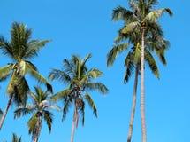 Green Palma Royalty Free Stock Images