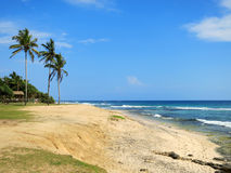 Green palms at empty beach in Weligama bay, Sri Lanka Stock Photo