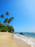 Green palms at empty beach in Weligama bay, Sri Lanka Stock Image