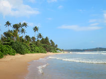 Green palms at empty beach in Weligama bay, Sri Lanka Stock Photos