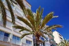 Green palms and hotels. Royalty Free Stock Photo