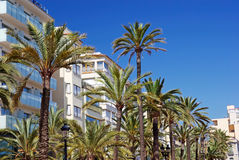 Green palms, hotels. Royalty Free Stock Photography