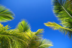Green  palms leaf on blue sky background Stock Image
