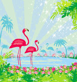Green palms and pink flamingo Royalty Free Stock Photos