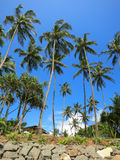 Green palms at the rocks in Weligama, Sri Lanka Royalty Free Stock Photos