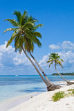 Green palms on a white sand beach Royalty Free Stock Photo