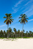Green palms on a white sand beach Stock Photo