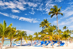 Green palms on white sand beach Stock Photography