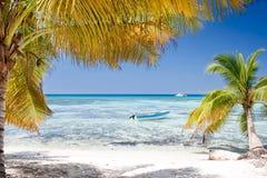 Green palms on white sand beach under blue sky Stock Photo
