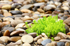 Green palnt with rock Royalty Free Stock Images