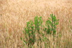 Green palnts on crop field Stock Photo