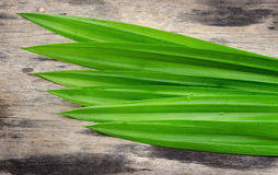 Green pandan on wood background Royalty Free Stock Photo