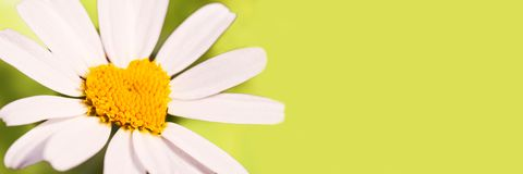 Green panoramic banner with a daisy in the shape of a heart. Love concept royalty free stock images