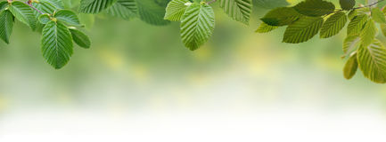 Green Panoramic Leaves Royalty Free Stock Image