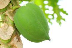 Green papaya fruit Royalty Free Stock Images