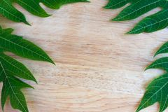 green papaya leaf on wooden background for texture royalty free stock images