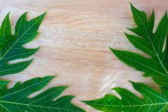 green papaya leaf on wooden background for texture stock images