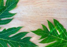 green papaya leaf on wooden background for texture stock image