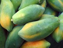 Green Papayas Royalty Free Stock Photography