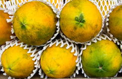 Green papayas in a basket. Royalty Free Stock Images