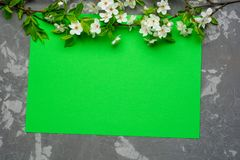 Green paper background with cherry tree blossom. Flat lay with spring elements and copy space.  Royalty Free Stock Photo