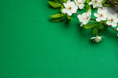 Green paper background with cherry tree blossom. Flat lay with spring elements and copy space.  Stock Images