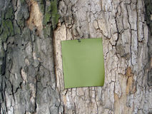 Green paper at the cortex of tree Stock Image