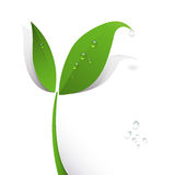 Green paper leaf and water drops Royalty Free Stock Photography