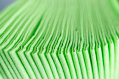 Green paper napkins Stock Image