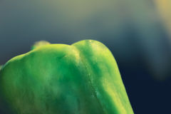 Green Paprika Royalty Free Stock Photo