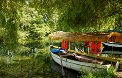 Green paradise. Near the Monastery of St.. Naum of Ohrid, Ohrid, Ohrid Lake, Macedonia Royalty Free Stock Images