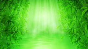 Green Paradise stock footage