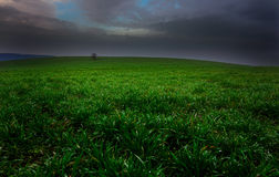 Green paradise. In fields, Bulgaria Stock Image