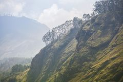 Green paradise in Sri Lanka royalty free stock images