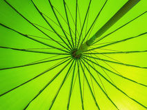 Green parasol Royalty Free Stock Photography