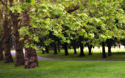 Green Park Royalty Free Stock Photography